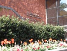 wharton-flowers